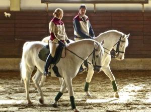 horses-600212_1280
