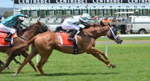 Race horse blog